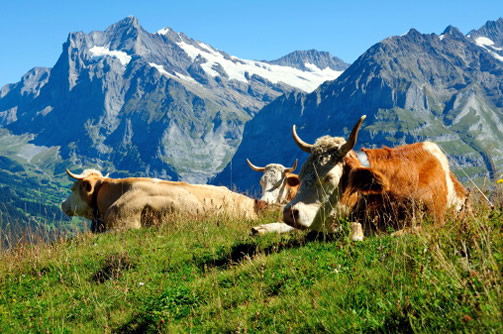 Все фото Швейцарии