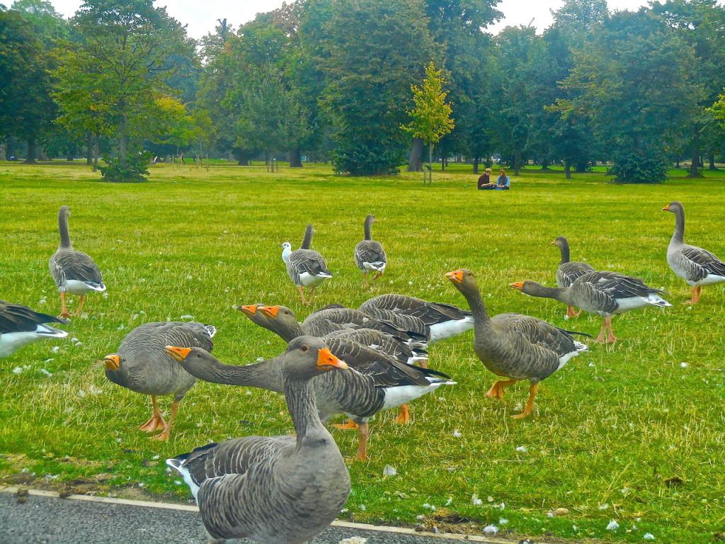 Знаменитый Гайд-парк (Лондон)