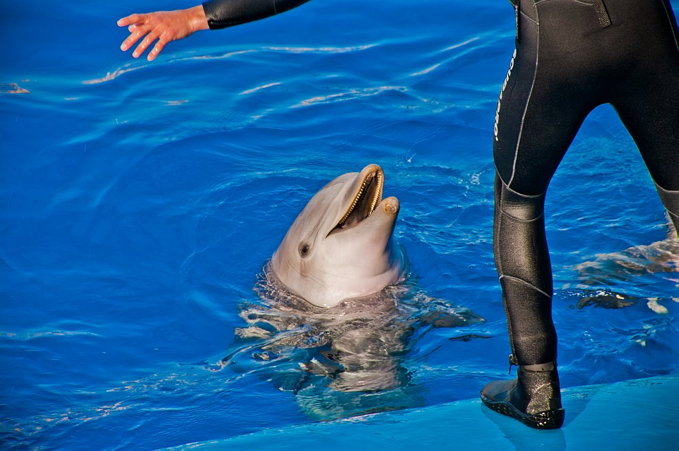 Дрессировка дельфинов в Океанариуме Валенсии