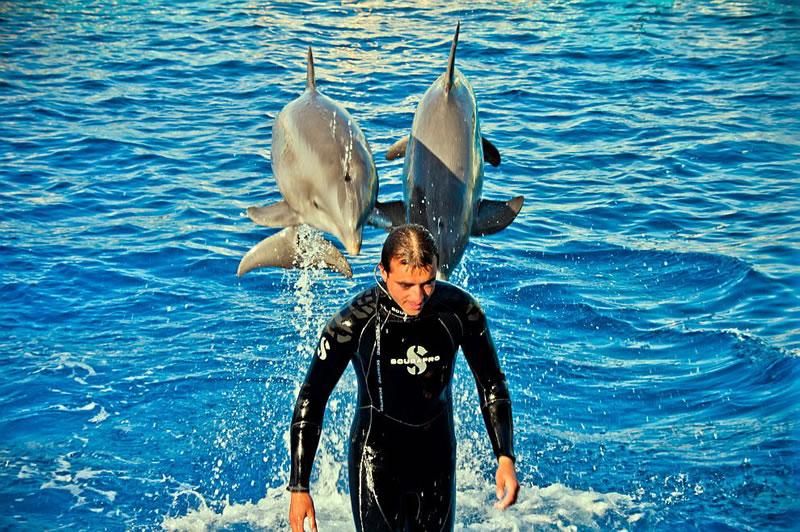 В Океанариуме целый этаж отдан в полное распоряжение дельфинов. Причем посетители (речь, в первую очередь о юных гостях) могут даже поучаствовать в дрессировке этих добрейших (в отличие от здешних акул) созданий