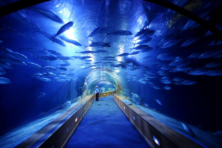 """А вот и акулы (которые далеко """"не дельфины""""). В павильоне """"Океаны"""", посвященному обитателям Тихого, Индийского и Атлантического океанам, находится несколько видов акул (в том числе и тигровые). Особо острые впечатления дарит """"Подводный тоннель"""""""