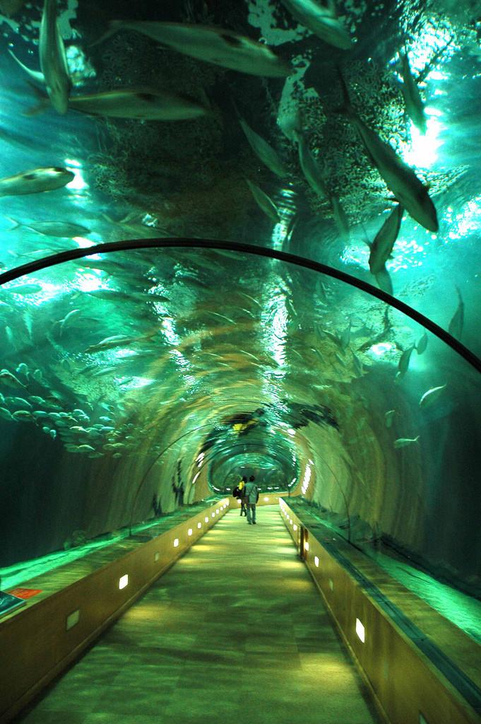 Подводный тоннель в океанариуме в Валенсии