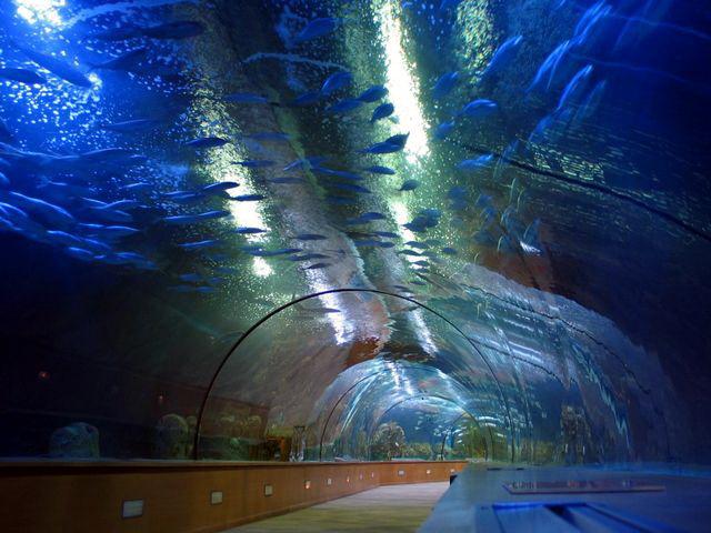 Но вернемся к Океанариуму - любиммейшему месту туристов всего мира - и еще раз пройдемся под тоннелем, над которым плавают акулы и сотни тонн воды. Думаете страшно? Совсем нет! Но место одно из знаковых!