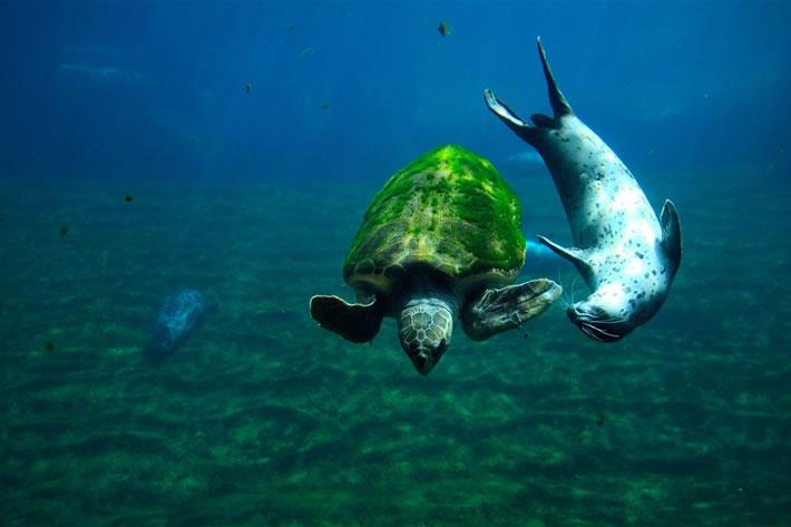 Океанографический парк (Валенсия, Испания)