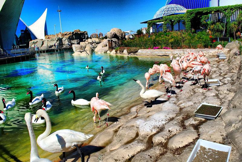 Город искусств и наук в Валенсии - это еще и чудесное место отдыха после всего увиденного, услышанного и сфотографированного. Лебеди и розовые фламинго - правда очаровательно?