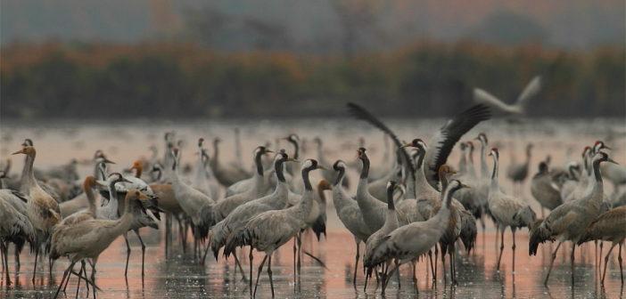 Национальный парк Хортобадь — достояние Венгрии